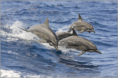 Dolphins jump in