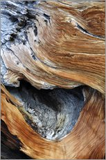 Detail from the trunk of an old pine tree