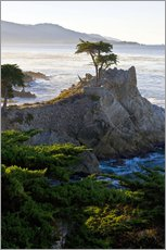 The famous Lone Cypress on the California coast
