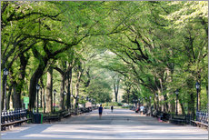The Mall in spring, Central park, New York city, USA