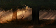 The silhouette of a Roth Irschs, Cervus elaphus, in the morning in the autumn mist