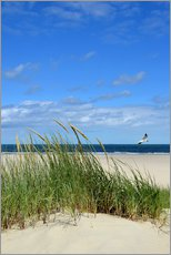 Dune with seagull