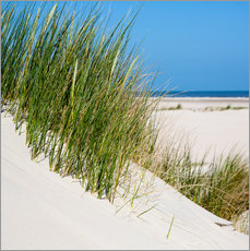 Dunes with grass at the coastline of the german island Norderney (Germany)