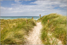 Path in the dunes on the German Baltic Sea