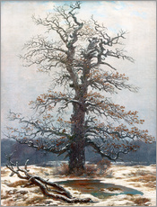 Oak Tree in Snow