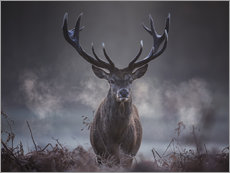 A majestic red deer stag breathes out in the winter air