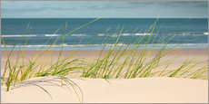 Dune with fine beach grass