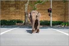 Elephant crossing the street in the city