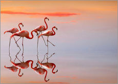 Flamingos in the mirror