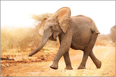 Happy elephant, South Africa