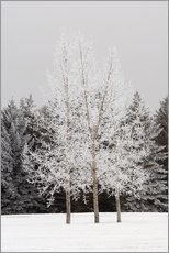 Frost On Trees
