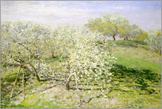 Spring, flowering apple trees