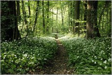 Spring-Forest Ramsons