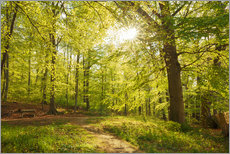Spring forest with sunshine