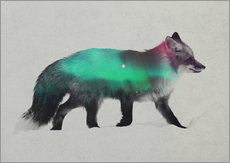 Fox In The Aurora Borealis