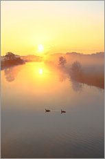 Geese in Sunrise