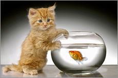 Ginger cat and fishbowl