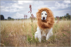 Golden Retriever with lion's mane