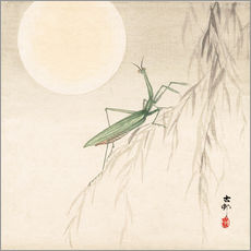praying mantis on willow branch, a full moon above