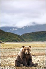 Grizzly bear resting against Kinak Bay