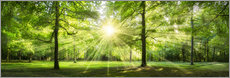 Green Forest Panorama in sunlight
