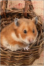 Hamster in a wicker basket