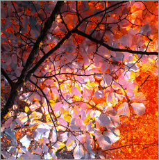 autumn tree I