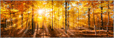 Autumnal forest panorama in sunlight