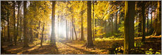 Autumn forest backlit with sunshine and yellow autumn leaves