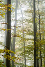 Foggy forest in autumn foliage