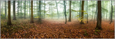 Autumn forest panorama with red autumn leaves