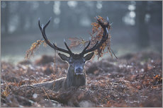 Deer stag in the brushwood
