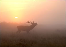 Misty morning stag