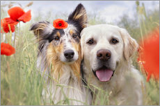 dogs in poppy field