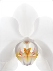 in the throat of the Orchid