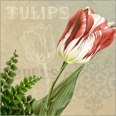 Best in Show Tulip