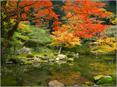 Japanese garden in autumn with red maple tree