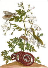 jasmine with snake and lepidoptera metamorphosis