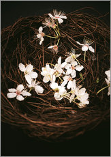 Cherry Blossoms in Nest