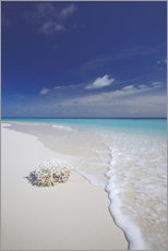 Coral on white sand beach