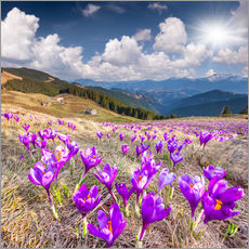 Crocuses in a mountain landscape