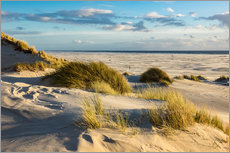 Landscape with dunes on the North Sea island Amrum