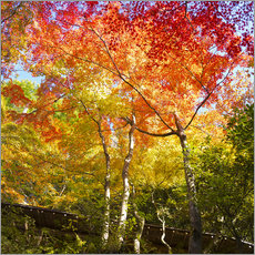 Bright colors in the autumn forest