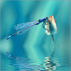 Dragonfly with Reflection
