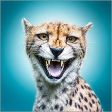 Funny Wild Faces Cheetah