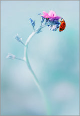 Ladybug on forget me not flower