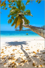 Sea view with palm tree