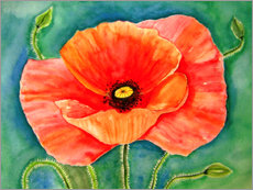 Poppy flower painting watercolor