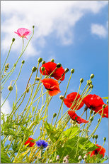 Poppies into the sky