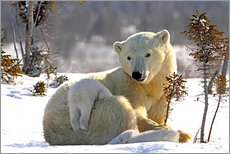 Mother Polar Bear